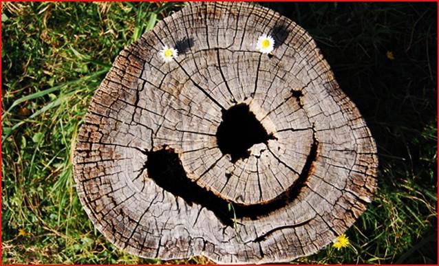 blogga 1254, mi dia il numero di obama, numero, operatore, pianta, tronco, città, san, benedetto