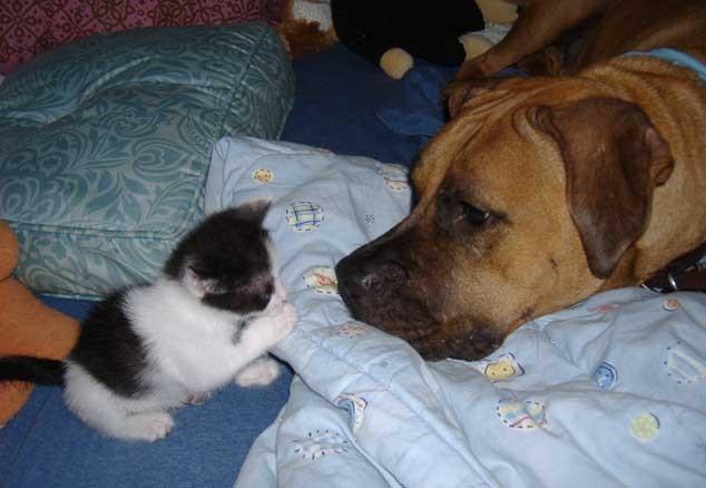 blogga 1254, codice strada, animali