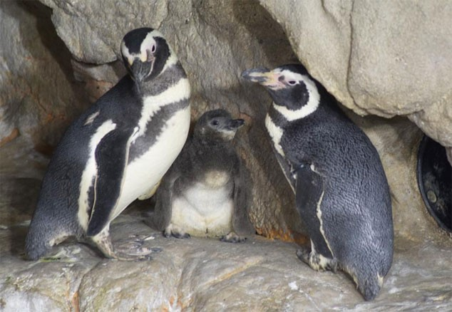 blogga 1254, acquario genova, pinguino