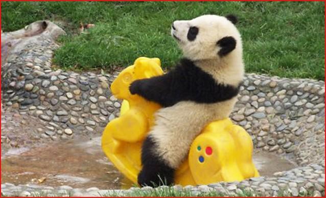 blogga 1254, mi dia il numero di obama, numero, operatore, concessionaria, auto, panda, sorrento
