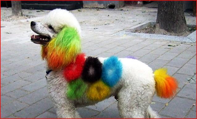 blogga 1254, mi dia il numero di obama, numero, operatore, verde, nero, colori