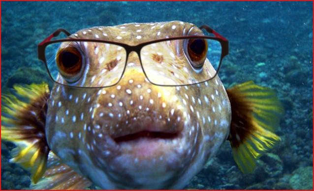 blogga 1254, mi dia il numero di obama, numero, operatore, ottico, oculisti, caccia, pesca, ittico, mare, pulito